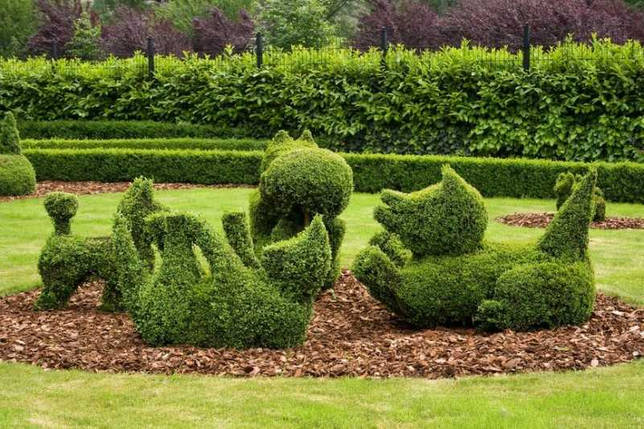 Топиарий из искусственной травы: разновидности, рекомендации по созданию